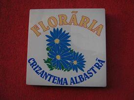 Floraria crizantema